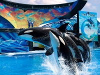oracs seaworld orlando